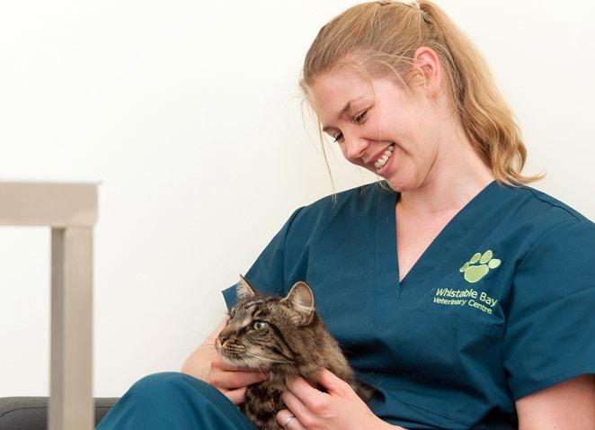 Whitstable-Bay-Vets-Cat-Kitten-Care